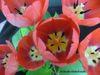 Tulips2008pattern1